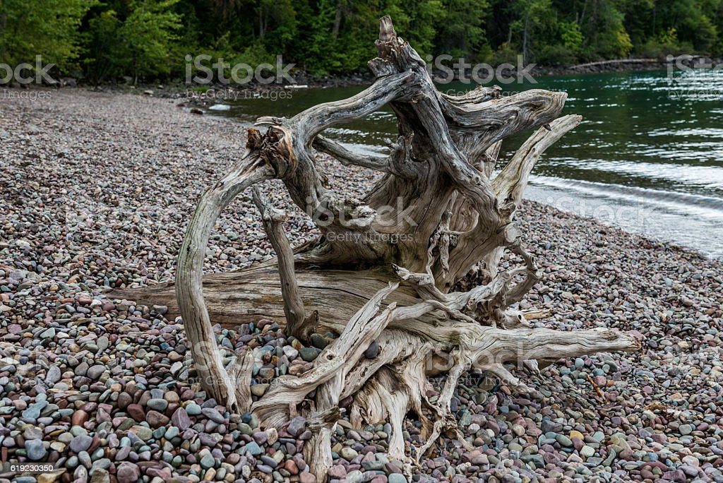 Old tree root, Lake McDonald, Glacier National Park stock photo