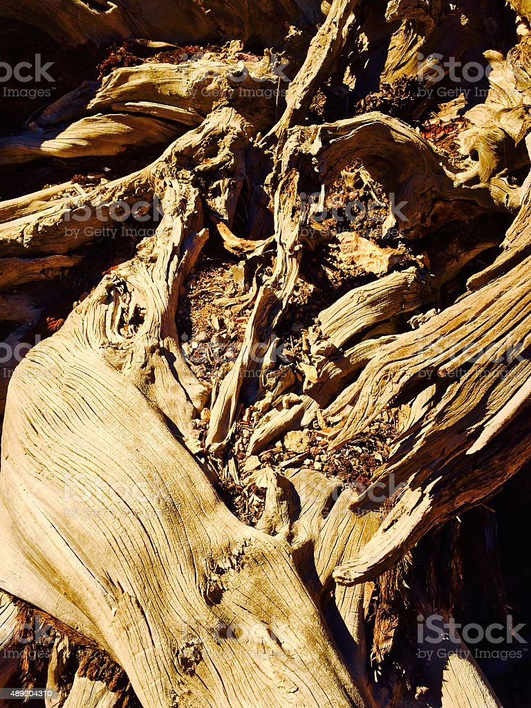 Old tree roots royalty-free stock photo