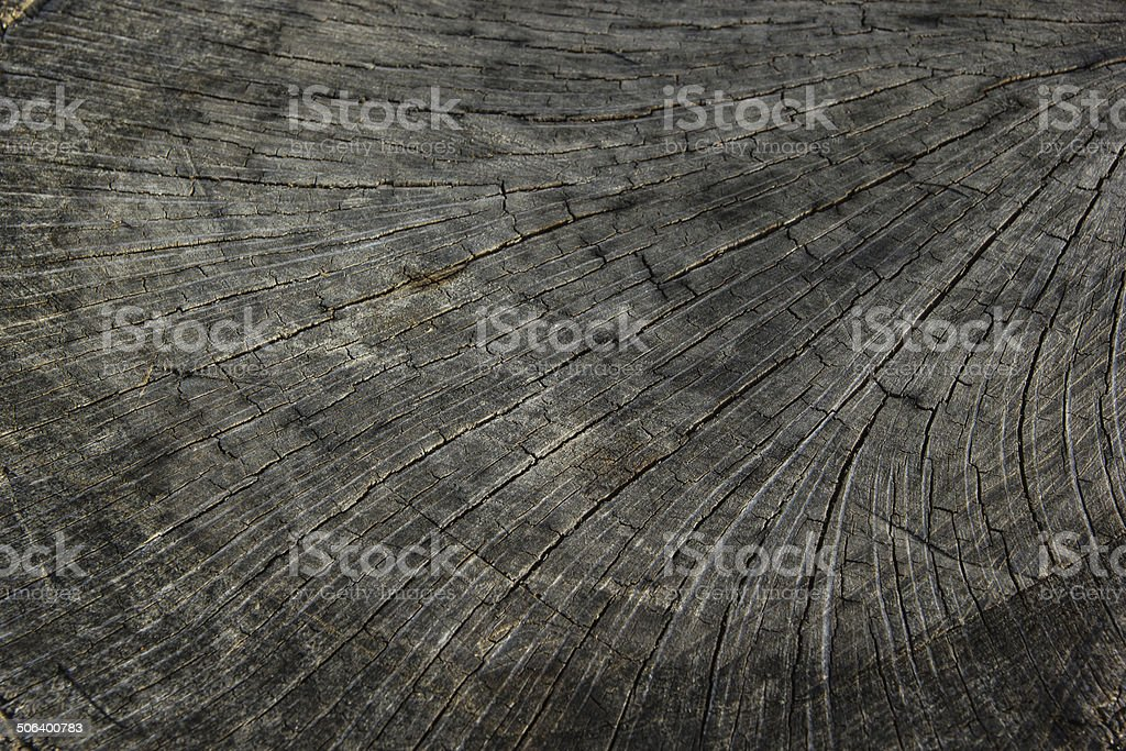 old tree stump texture stock photo