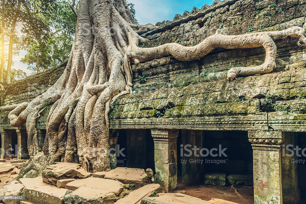 Old Tree, Ta Prohm Temple, Angkor Wat, Siem Reap, Cambodia stock photo