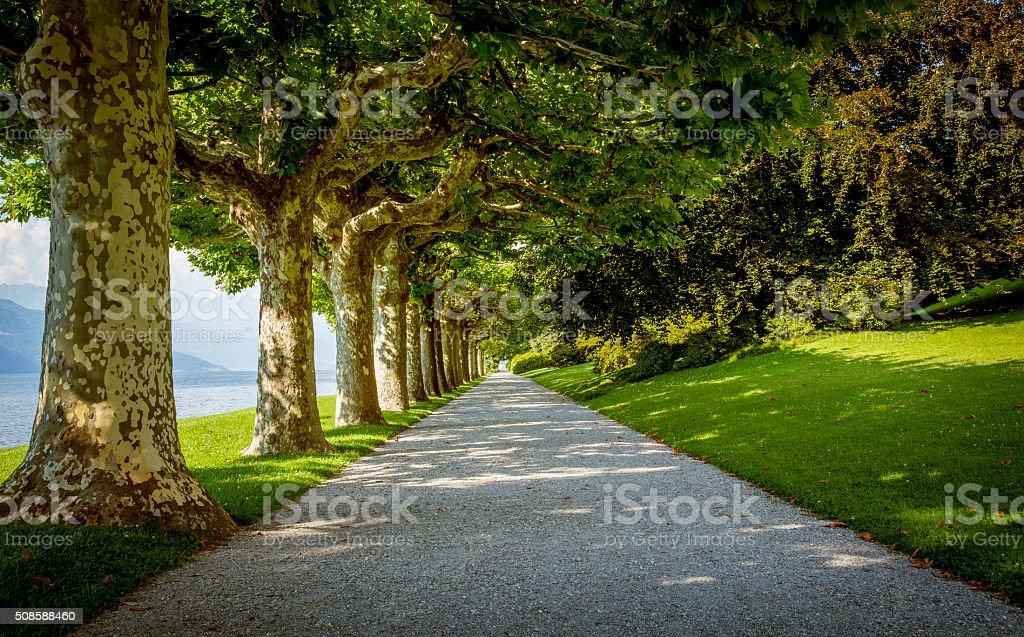 Old trees along park alley at Como lake stock photo
