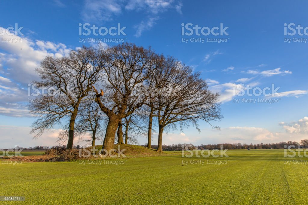 Old Trees on a tumulus or grave mound stock photo