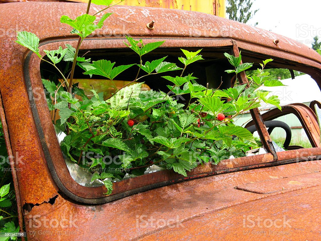 Old Truck II royalty-free stock photo