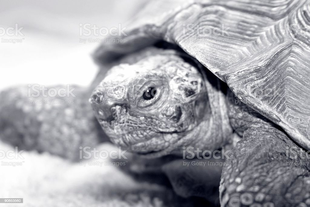 old turtle royalty-free stock photo