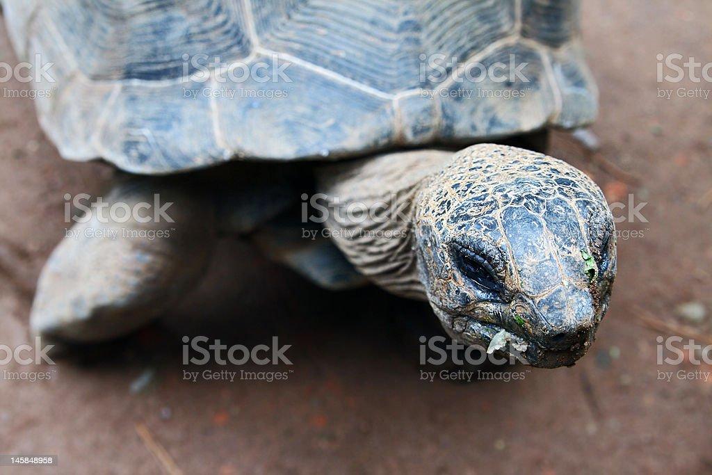 Old Turtle's Head Closeup stock photo