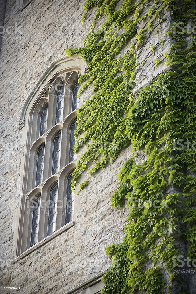 Old University window and ivy stock photo