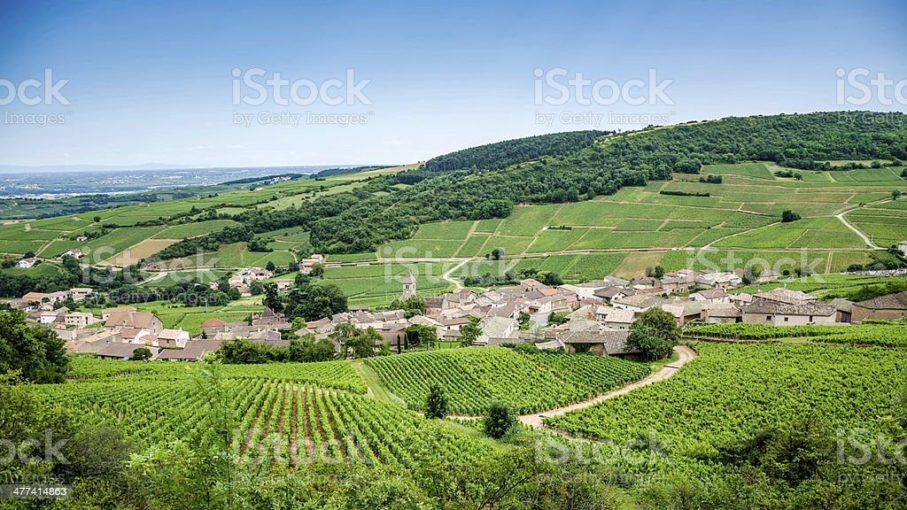 Old village with vineyards stock photo