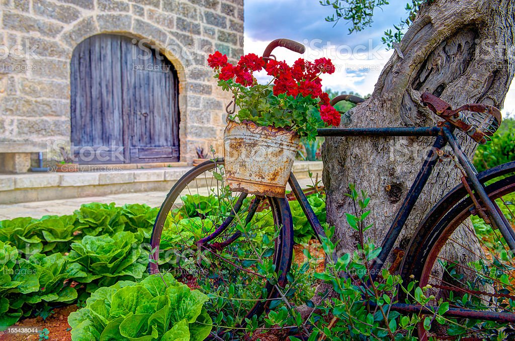 Old vintage bicycle stock photo