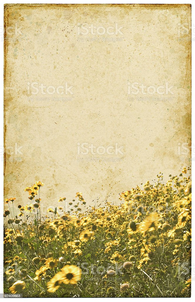 Old Vintage Flowers stock photo