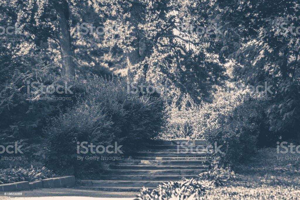 Old vintage photo. Park Bushes forest steps stock photo