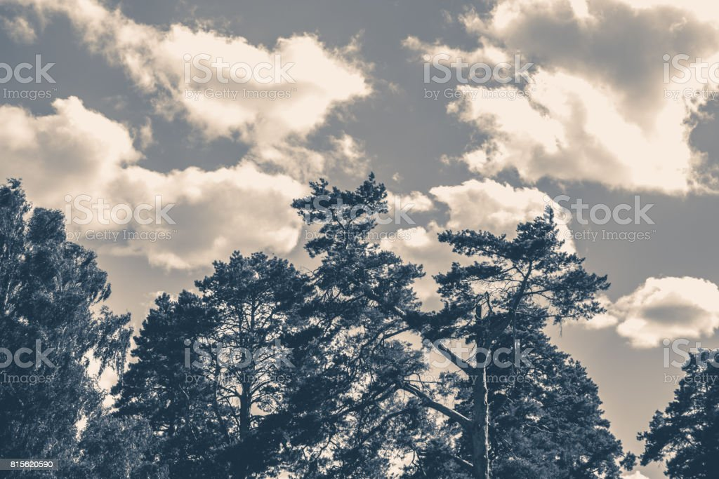Old vintage photo. Sky clouds trees top summer stock photo