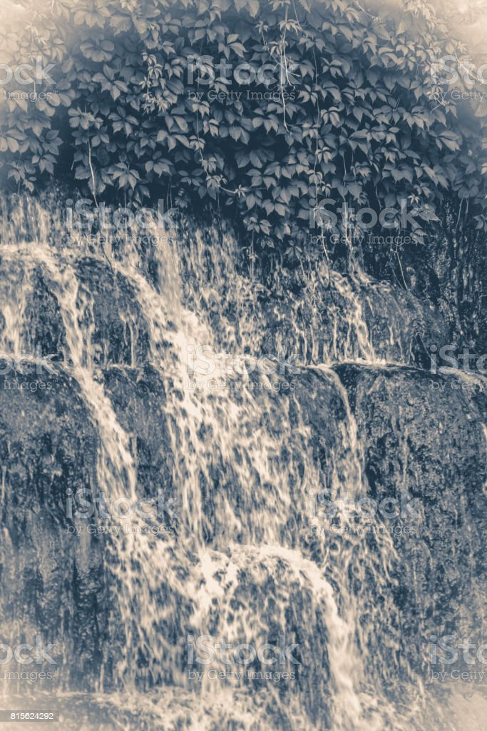 Old vintage photos. Park waterfall grass leaves stock photo