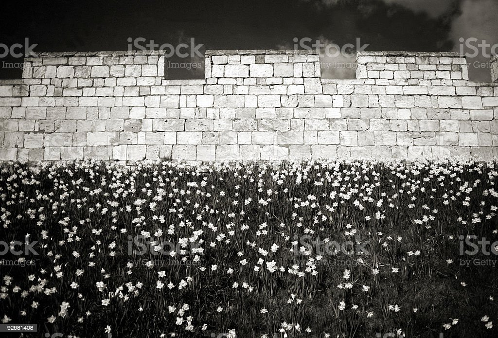 (B&W film) Old wall and flowers stock photo