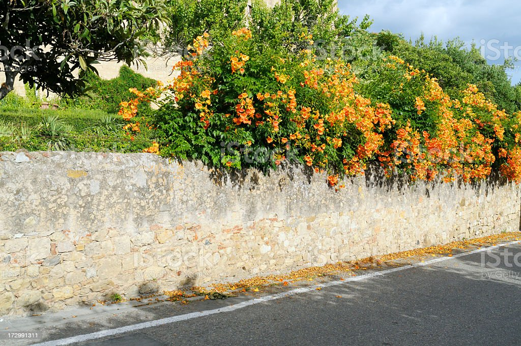 old wall with flowers royalty-free stock photo