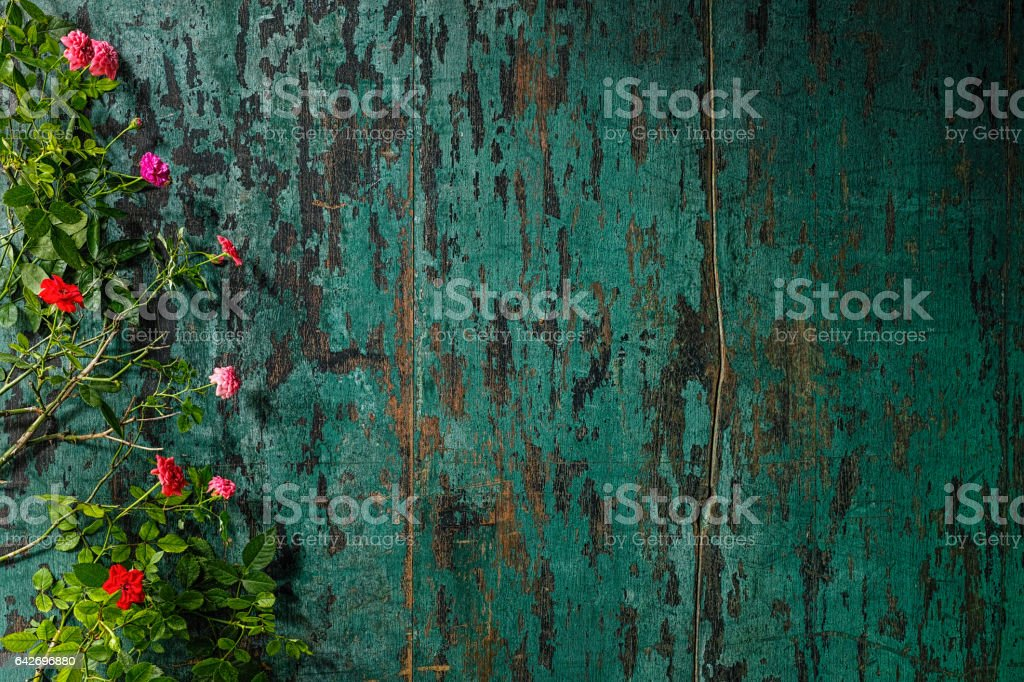 Old weathered wood turquoise background with red and pink roses framing it from one side. stock photo