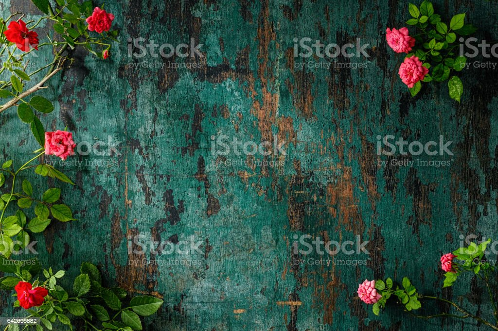 Old weathered wood turquoise background with red and pink roses framing it at the sides. stock photo