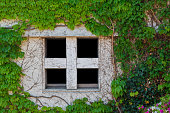 Old white window of abandoned house with creeping plant.