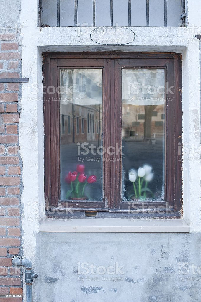 Old Window and Tulips royalty-free stock photo