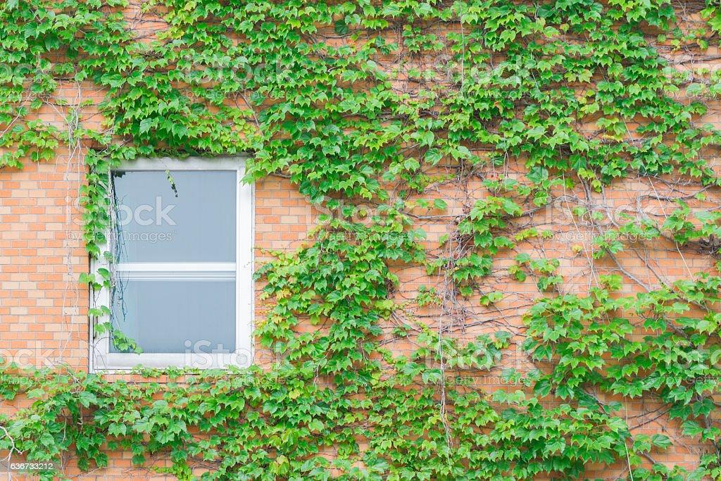 Old window of abandoned house stock photo