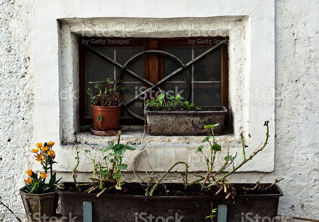 Stare okna z kwiatów zbiór zdjęć royalty-free