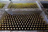 Old wine bottles in cellar. Spyder web visible. Old wine