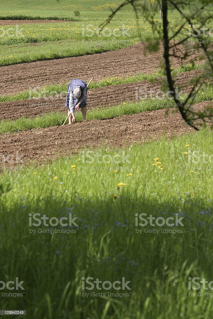 Old woman in the fields royalty-free stock photo