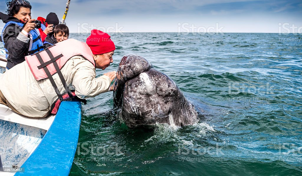 Old Woman Kissing a Gray Whale stock photo