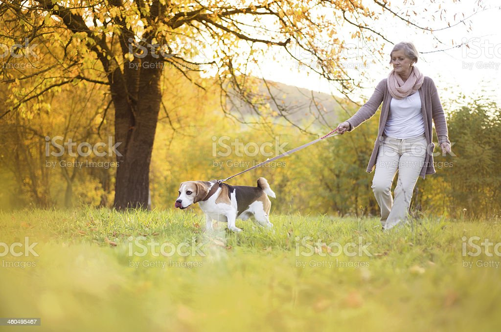 Old woman walking her dog outside stock photo