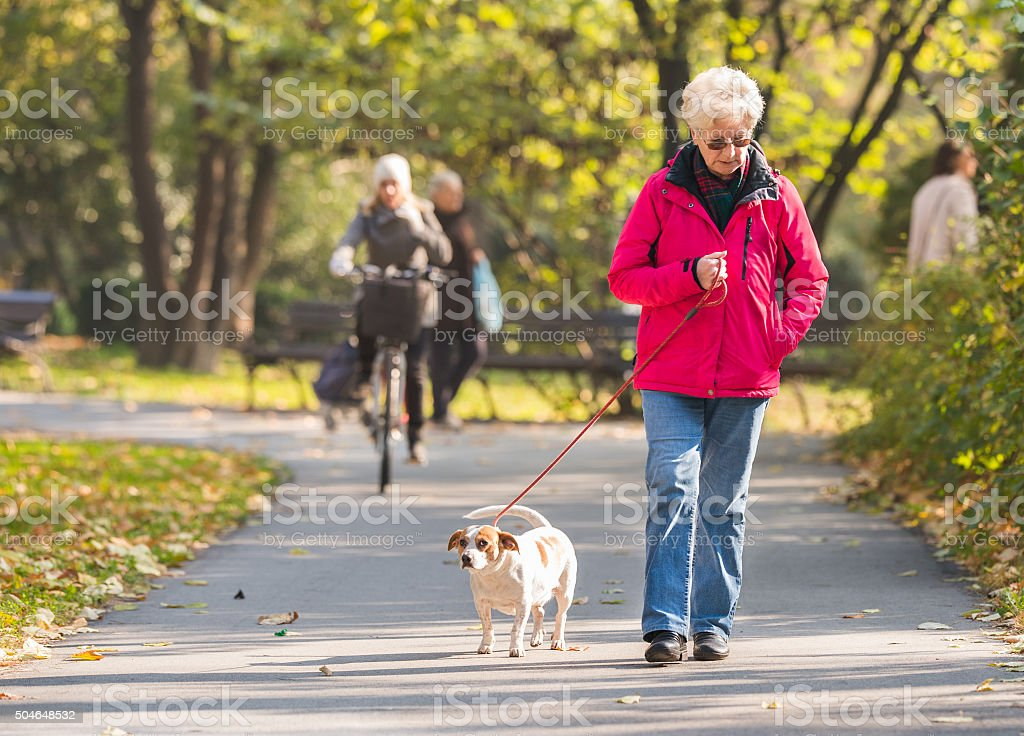 Old woman with a dog stock photo