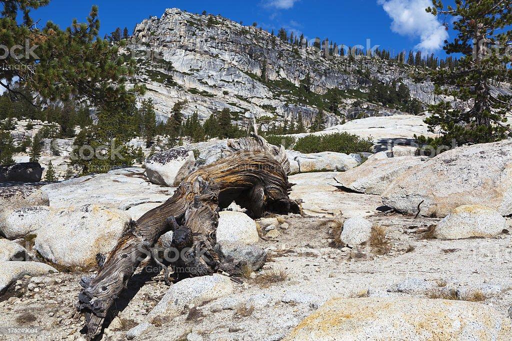 Old wood at Tioga Pass royalty-free stock photo