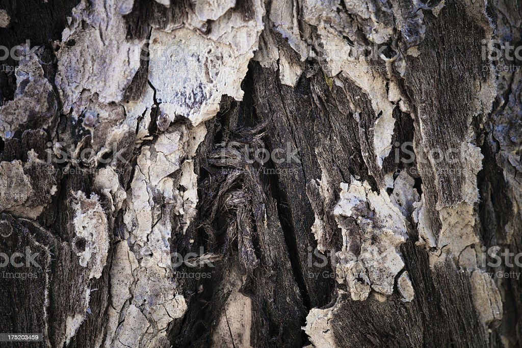 old wood backgrounds royalty-free stock photo