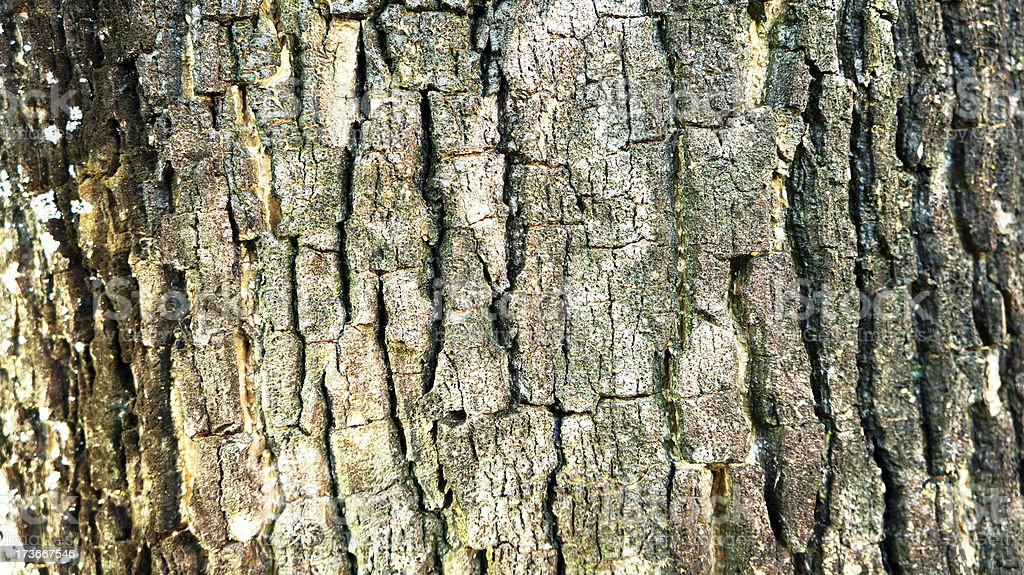 Old wood cracked texture royalty-free stock photo