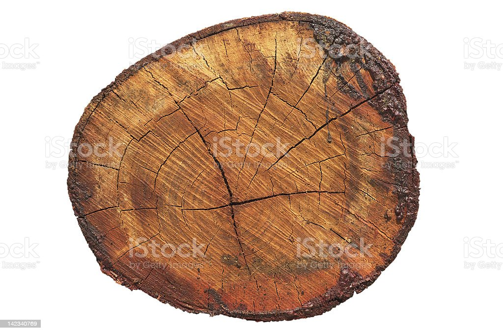 Old wood cross section royalty-free stock photo