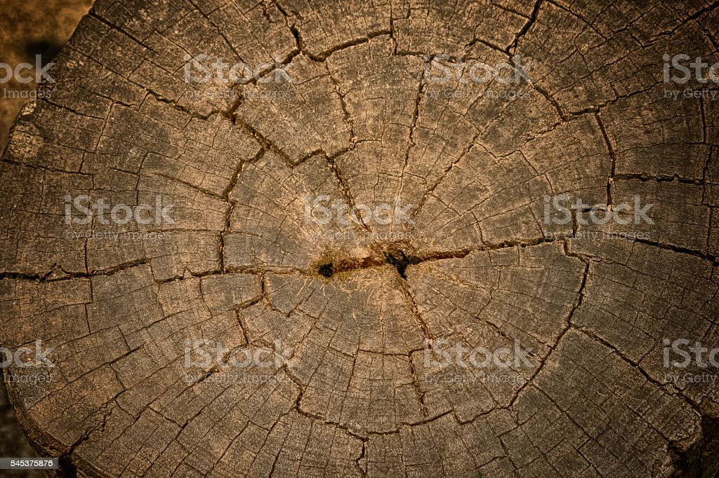 Old wood cut surface ,background and texture stock photo
