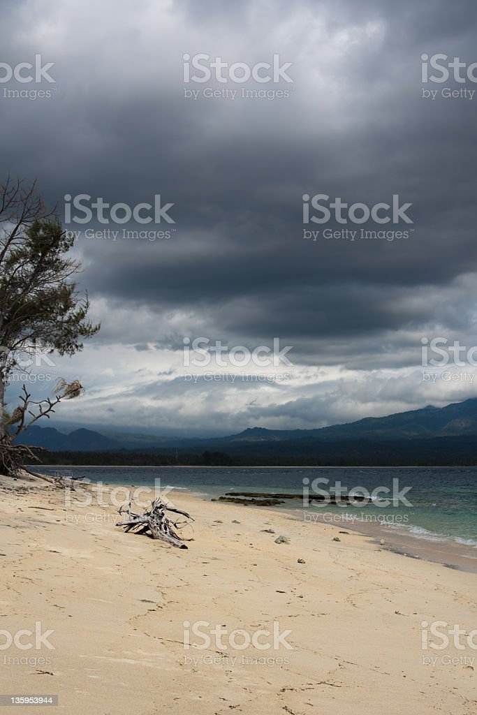 Old wood lying on the beach after a storm royalty-free stock photo
