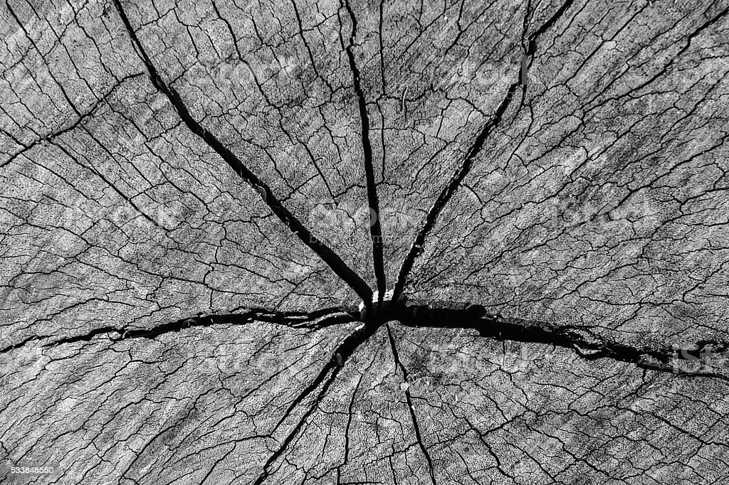 Old wood texture of cutted tree trunk stock photo
