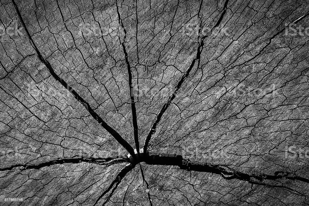 Old wood texture of cutted tree trunk vintage stlye stock photo