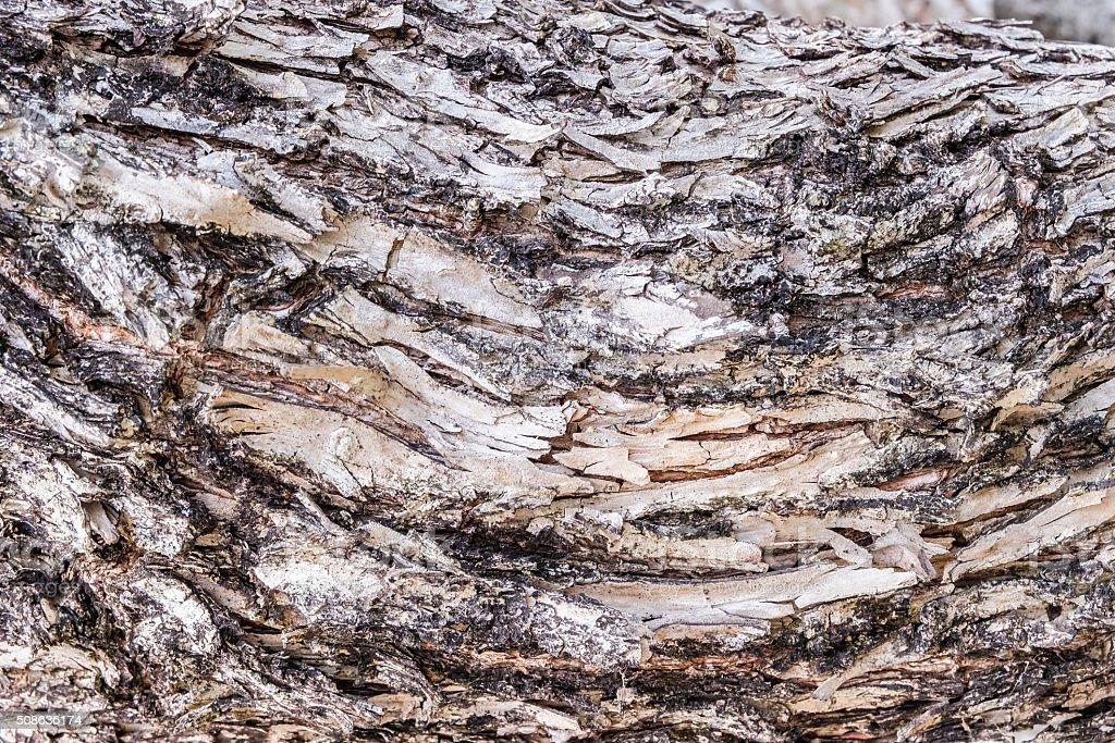 Viejo árbol de madera foto de stock libre de derechos