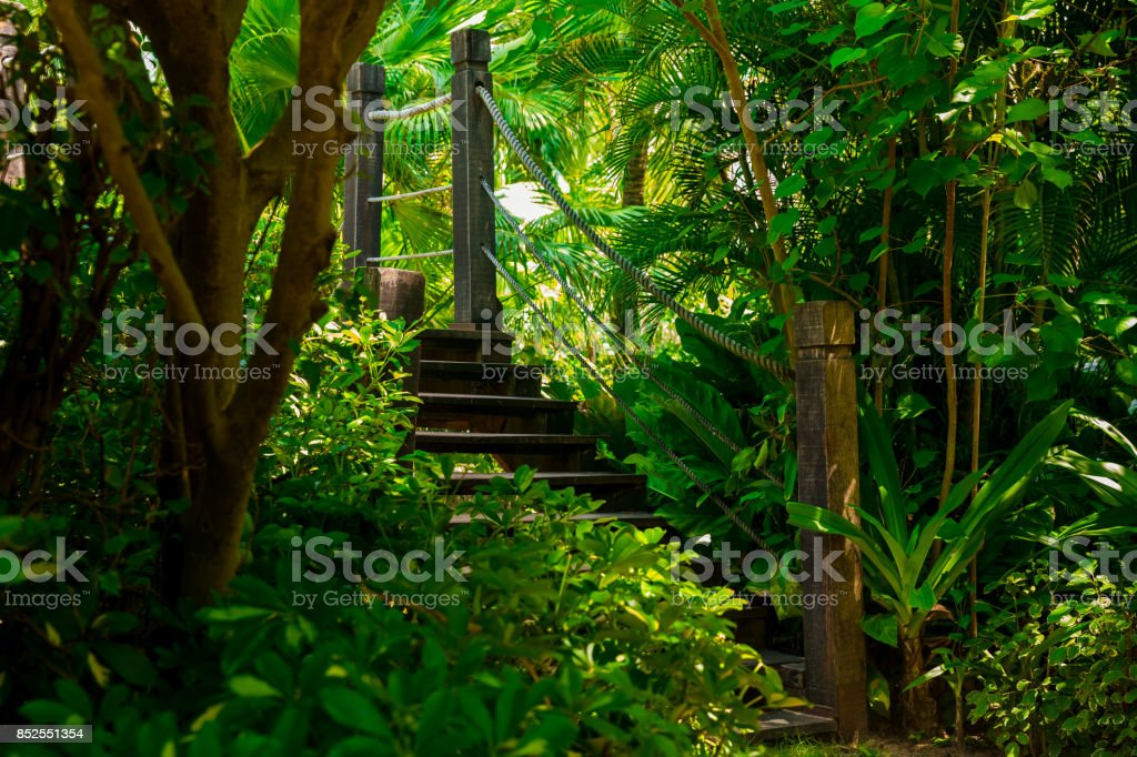 Old wooden bridge in tropical jungle. Crossing in the rainforest stock photo
