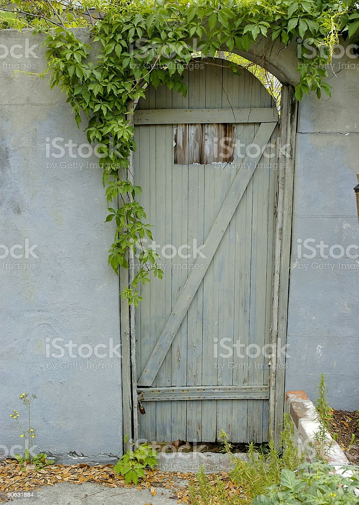 old wooden door covered with ivy royalty-free stock photo