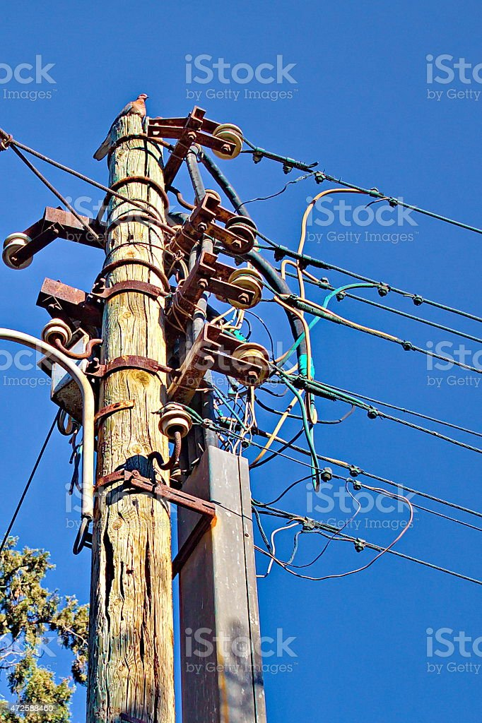 Old wooden electricity pole with the pigeon on the top. royalty-free stock photo
