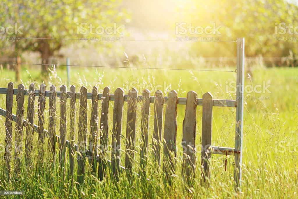 old wooden farm fence with high grass and sunlight stock photo