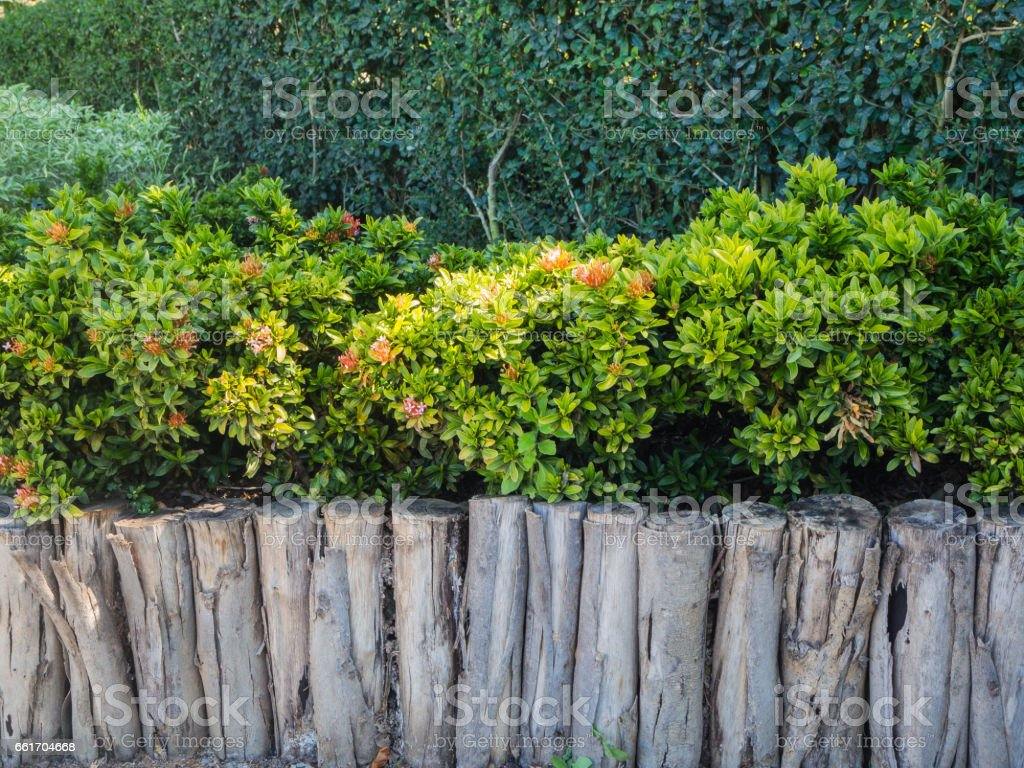 old wooden fence in garden with flower stock photo