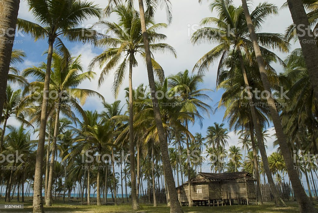Old wooden house among coconut trees stock photo
