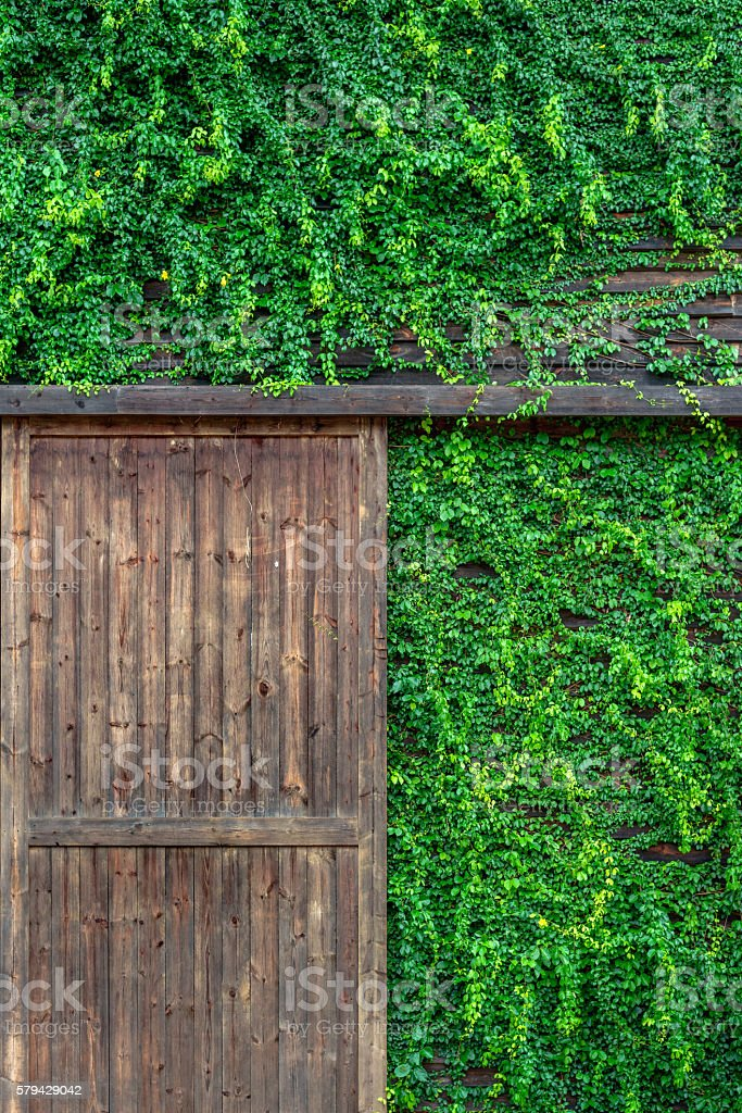Old wooden house covered with vines photo libre de droits
