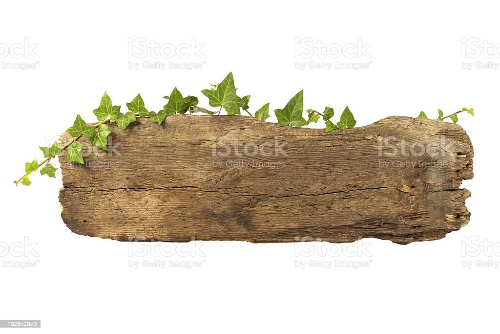 Old wooden plank entwined with ivy. royalty-free stock photo