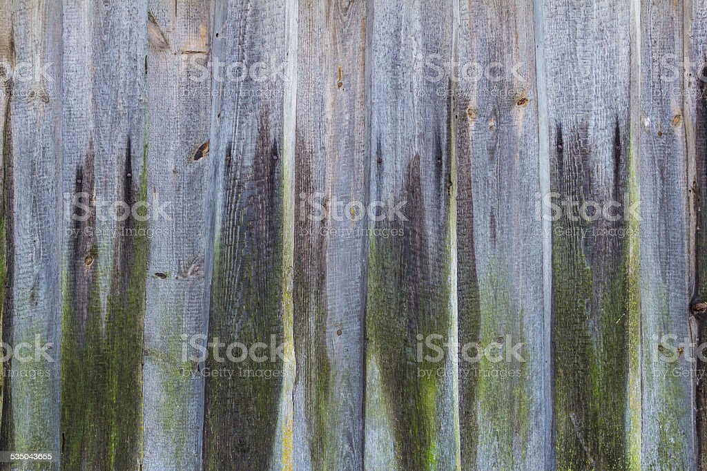 Old wooden planking wall covered with green moss stock photo