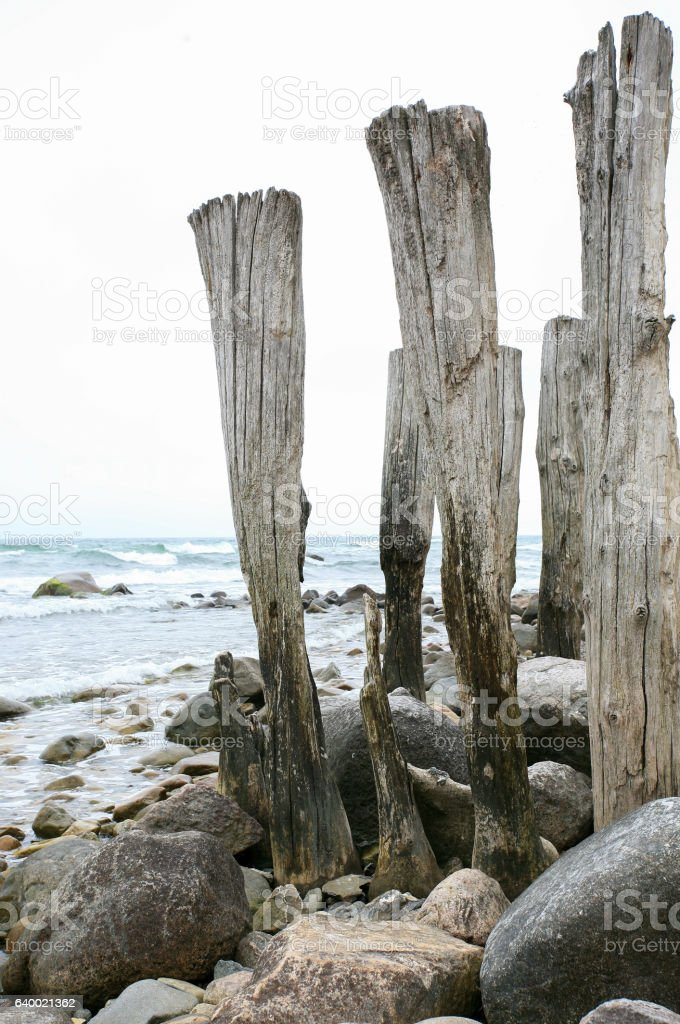Old wooden poles on the beach of the Baltic Sea stock photo