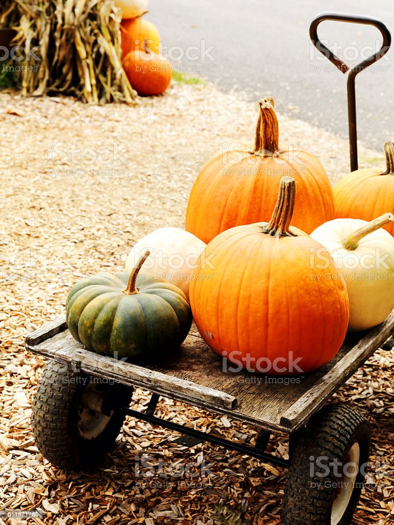 Old wooden wagon full of Pumpkin Patches stock photo