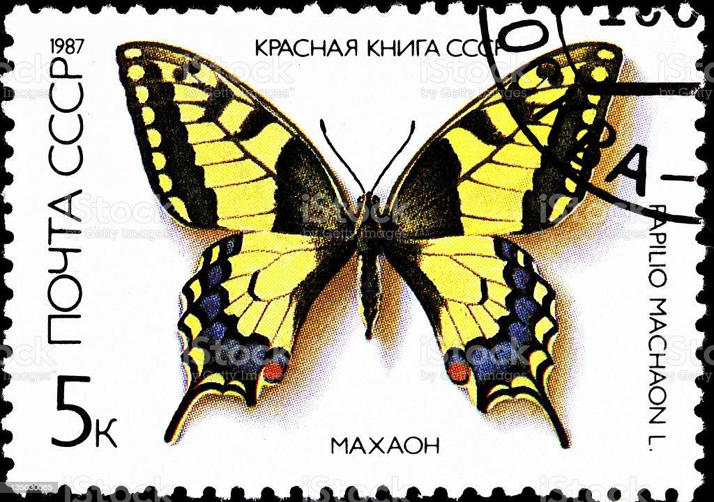 Old World Swallowtail Papilio machaon stock photo